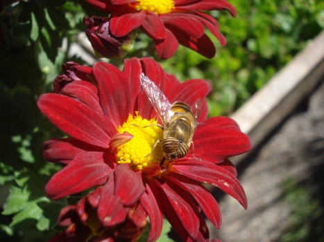 Como la abeja que construye gota a gota un gran panal, así quisiéramos construir un blog de relevancia, para poder llegar a la parte más sensible del mundo...