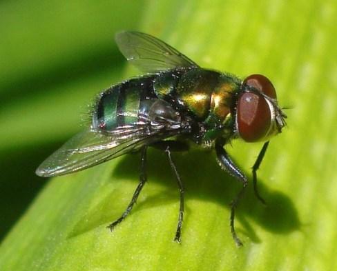Debemos estar sobre las autoridades corruptas como las moscas en la bosta.