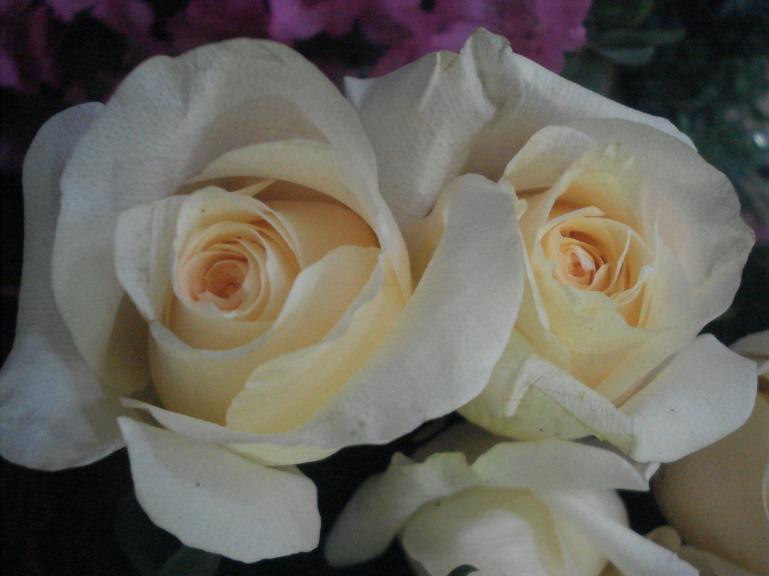 Con manifestaciones hon rosas festejamos agradecidos la visita 182.000 a este blog de Filatina.