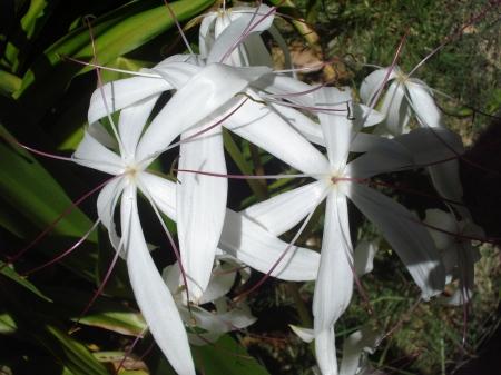 Flores de diferentes especies pueden observarse en los meses cálidos sin cortarlas.