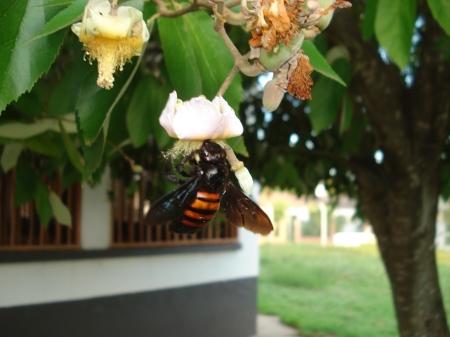 El abejorro, indica que no hay contaminación grosera, es un ejemplo de laboriosidad sin grandilocuencia.
