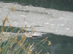 La mugre en la superficie esconde, disimula la que baja disuelta en el agua.