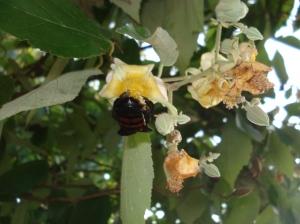 Árboles con flores, insectos libando, cambiando el polen de lugar, indicando que la contaminación agrícola en crecimiento aun no ha llegado hasta matarlos. Es un indicador ambiental.