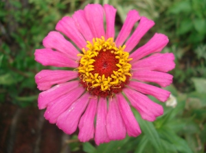 Flor perfecta, sin manchas, sin cortes, sin cera mente espectacular.