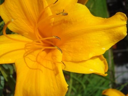 Hermosa flor amarilla.