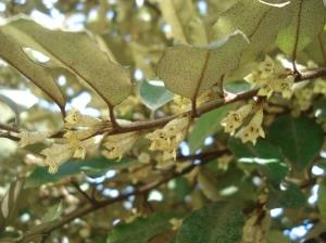 Flores mimetizadas con las mismas manchitas que las hojas!
