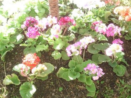 Flores, una expresión natural, el más atractivo.