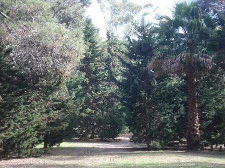 Arboricultura, paisajismo, ornicultura, conservación, ambientalismo en el Vivero de San Clemente del Tuyú.