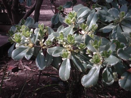 Respeto a la flora nativa, adaptación de fijadoras de médanos foráneas y conciencia del cuidado de las superficies forestadas.