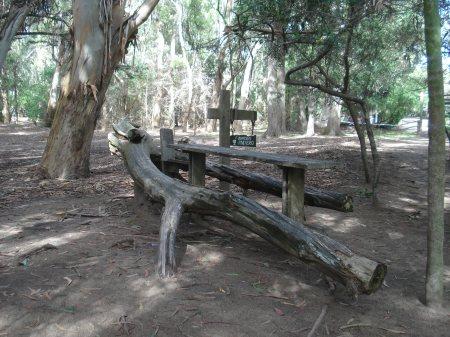 Los viejos troncos de árboles caidos son aprovechados como parte del paisaje.