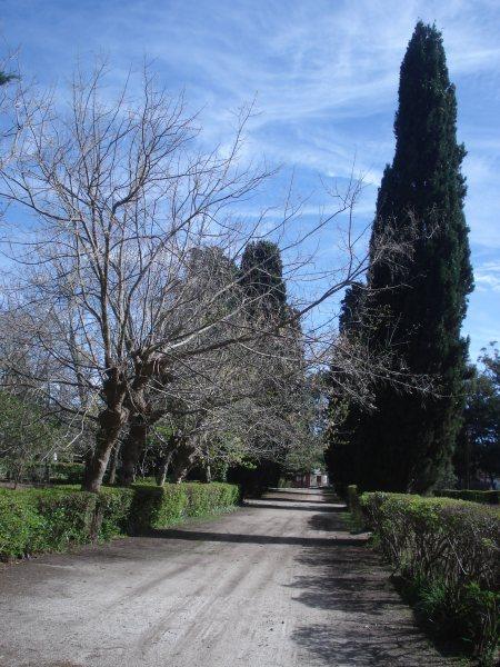 Caminos interiores del vivero de San Clemente del Tuyú. Fotos de Pablo Luis Caballero para FILATINA.