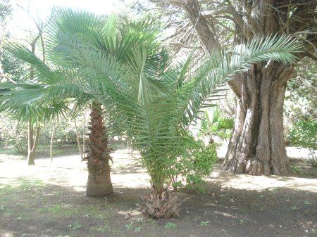 Añosos árboles, plantas, palmeras.
