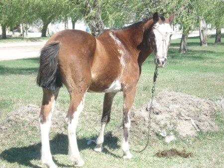 Los caballos son todos muy mansos, se ven muy bien cuidados, confiados, no son agradidos nunca por los chicos de las gomeras.