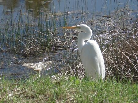 Las aves tienen derecho a estar libres y seguras. Especialmente en esta zona. Llegan migrando desde muy lejos, en esfuerzos aun inexplicables. No es aceptable que unos ignorantes las maten, menos aun impunemente, porque se repite.