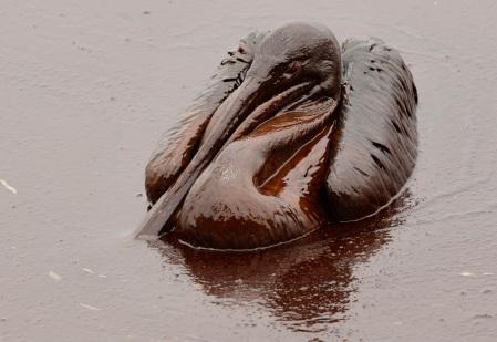 Un pelícano queda en el bronce: ya no hay manera de que se pueda salvar. El presidente de British Petroleum decretó que su vida no serviría para nada. ¿Un accidente? Explíquesenlo...