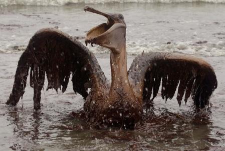 Cae el ave en el pantano de óleo implacable. Muere lentamente, muere sin poder respirar