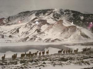 Los glaciares deben defenderse a sangre y fuego, son esenciales para la vida sana, son patrimonio nacional. Mantengamos la lla