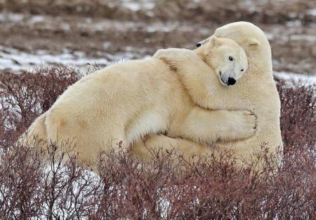 Te envío este abrazo de oso G. de R. de despedida, aunque aun siento el dolor en el alma por todo lo que pareciera que te sucedió después.