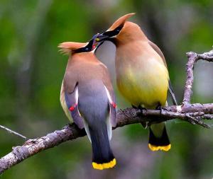 Aves Piquito