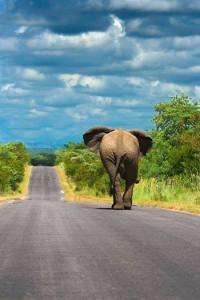 Elefante huyendo