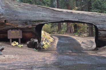 No hagas leña con el árbol caido