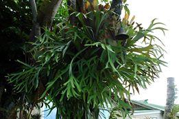 Planta en árbol 2