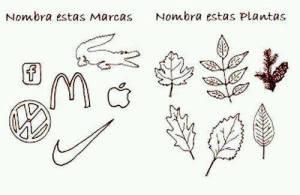 Plantas y marcas