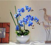 Flor orquídea azul y negra