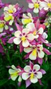 Flores crema y rojas