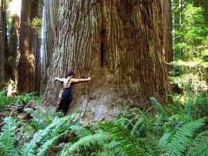 Abrazo al árbol amigo