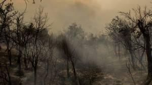 Bosque  incendio