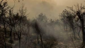 Bosque  incendio