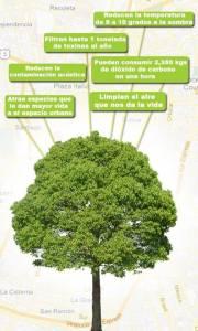 árbol (2)