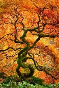 Árbol adorado