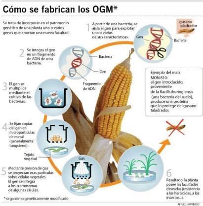 Fabricar OGM