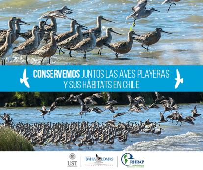 aves-migratorias-chile