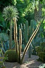 Cactus FBook