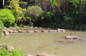 camino en fuente de agua